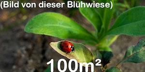 Blühwiese mit Schmetterlingen